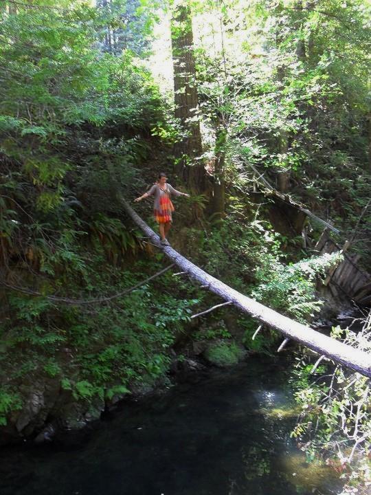 Mendocino Tree Crossing01 - David Friel (2)