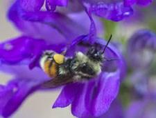 https://www.nps.gov/romo/learn/nature/wildflowers.htm