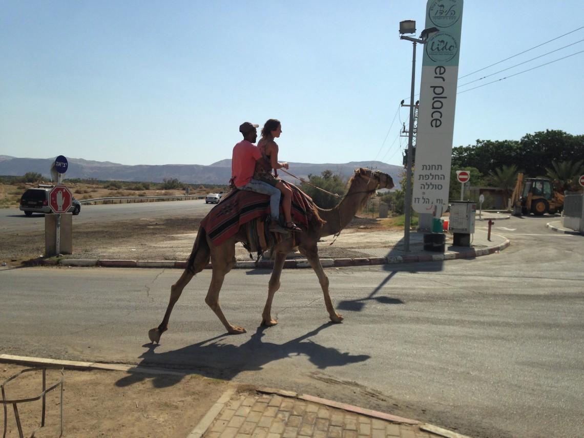 Gas Station Camel