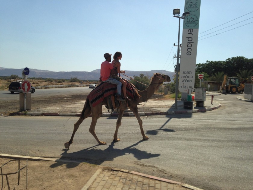 Gas Station Camel